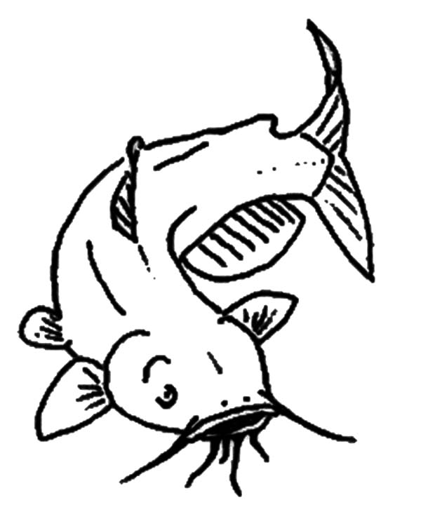 Catfish clipart coloring page. Drawing images at getdrawings