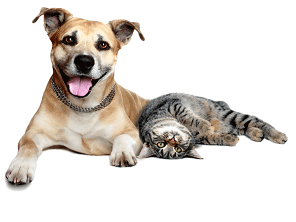 Cats and dogs png. Hd transparent images pluspng