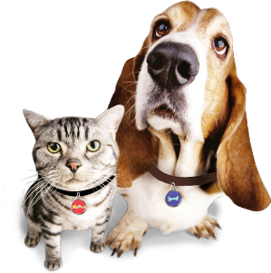 Cats and dogs png. Dog cat image