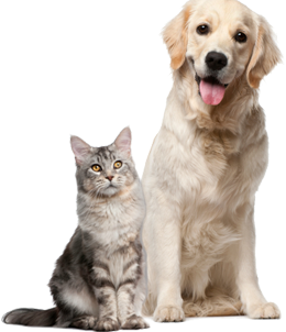 Cats and dogs png. Home southpaw petcare image