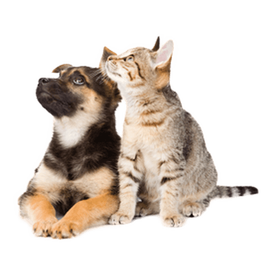 Cats and dogs png. Dog cat looking up