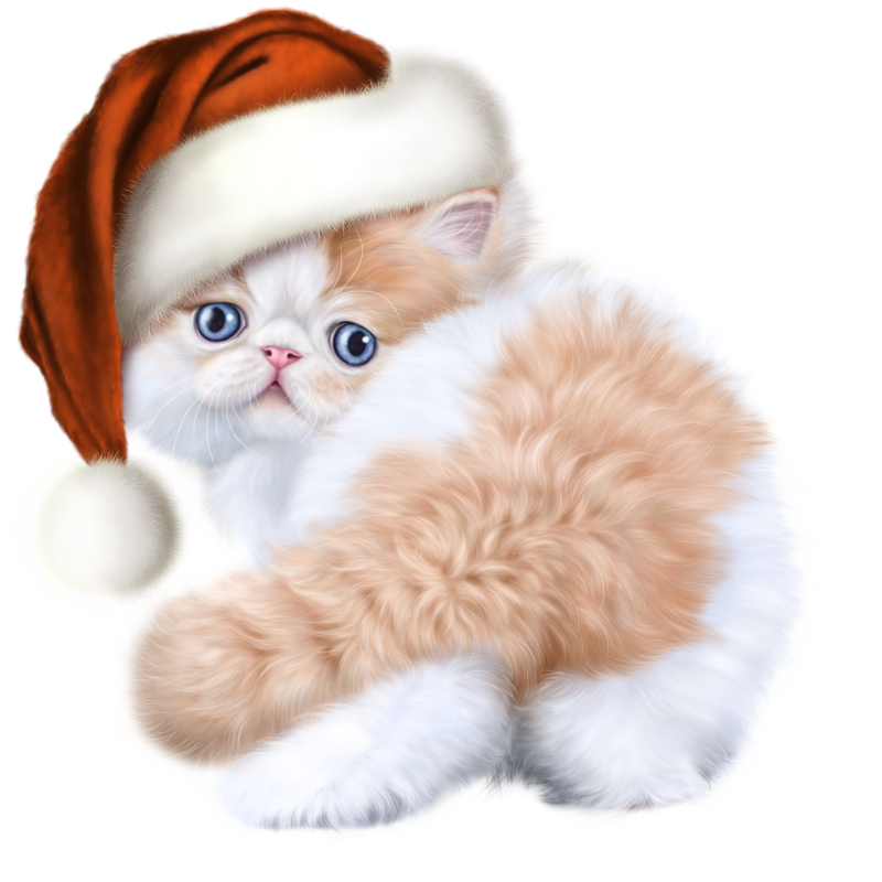Cats baby png. E d xl