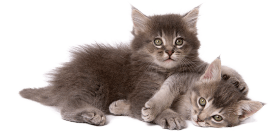 kittens transparent different