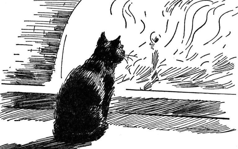 Cats playing with dark matter. The black cat plot
