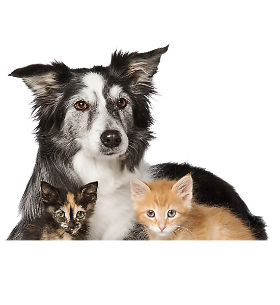 Husky transparent nc sale. Cats and dogs for
