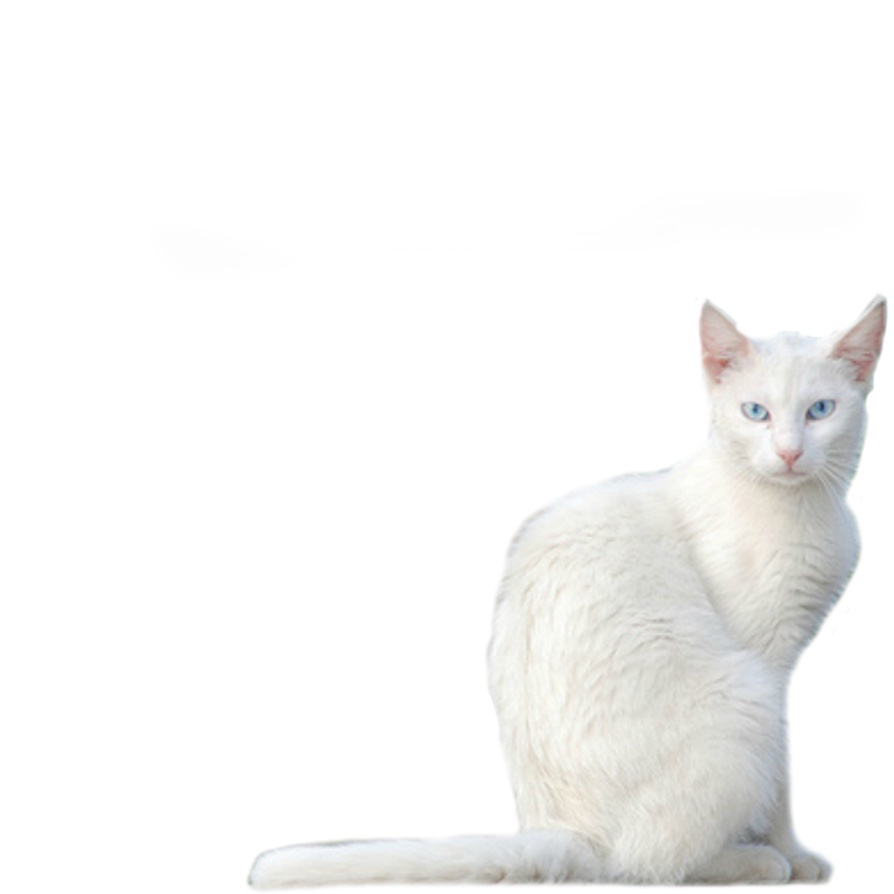 Kitty transparent white. Png stock by vamp