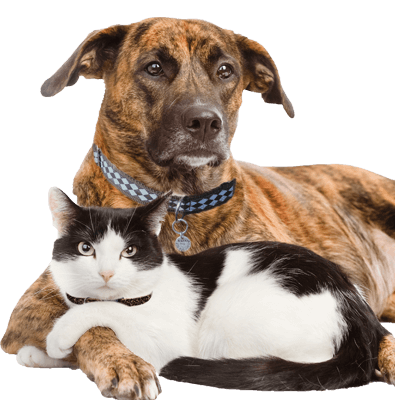 Cats in shelters png. Pet not found shelter