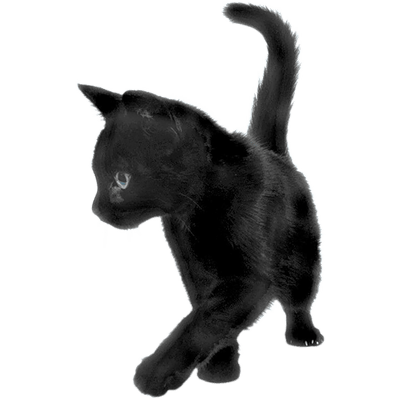 Kitty transparent bg. Cats png images stickpng