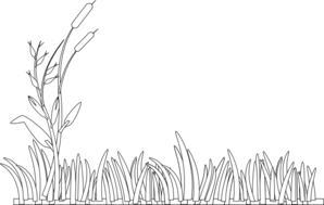 Cattails vector. Outline clip art at