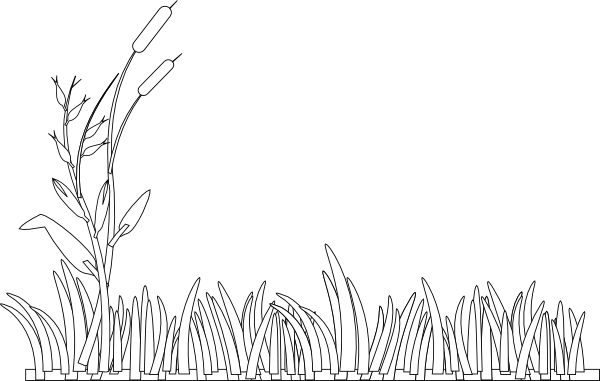 Cattails drawing. Outline clip art at