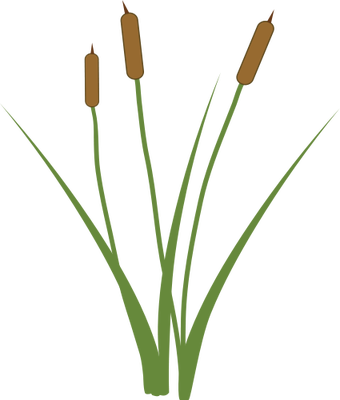 Cattails drawing. Collection of cat