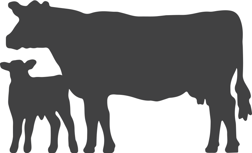 Cattle vector angus bull. Cow silhouette at getdrawings