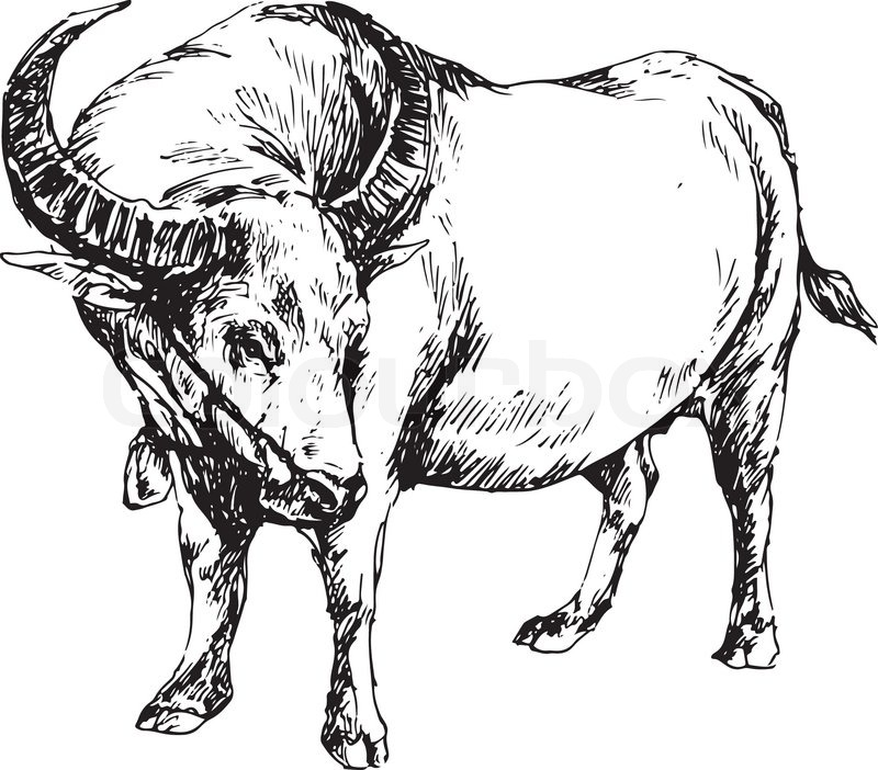 Cattle clipart carabao. Drawing at getdrawings com