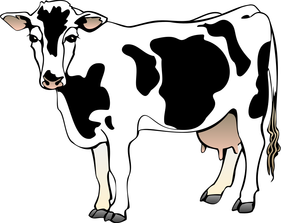 Femur drawing bovine