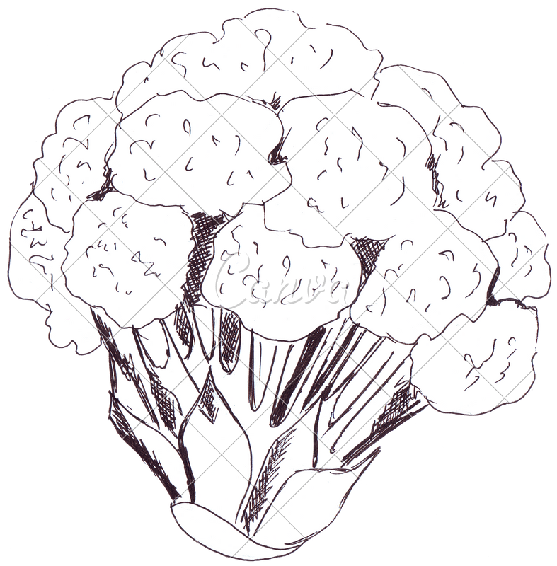 Cauliflower drawing ink. Photos by canva