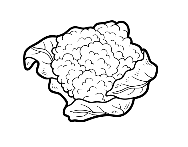 Cauliflower drawing. Vegetable broccoli coloring book