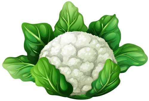 Cauliflower drawing. Collection of free colliflower