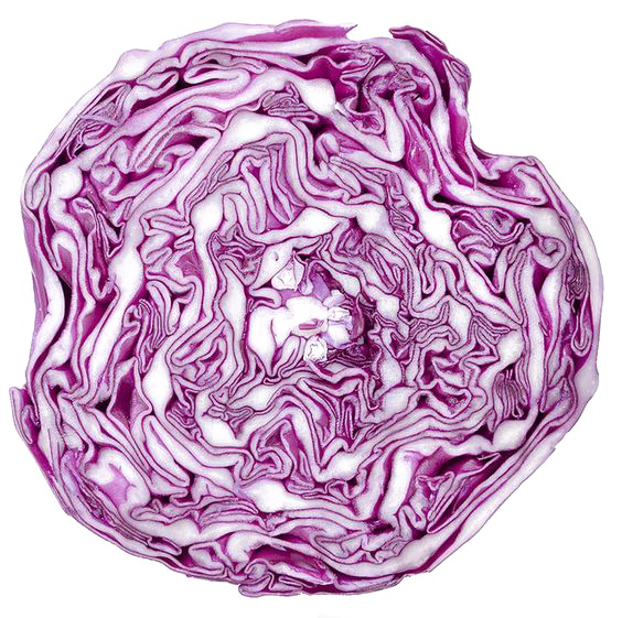 Cauliflower drawing cabbage. Red vegetable purple
