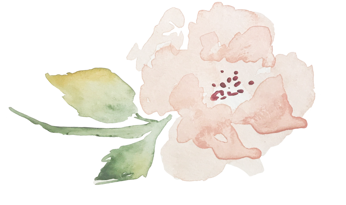 Cauliflower drawing watercolor. Contact peony