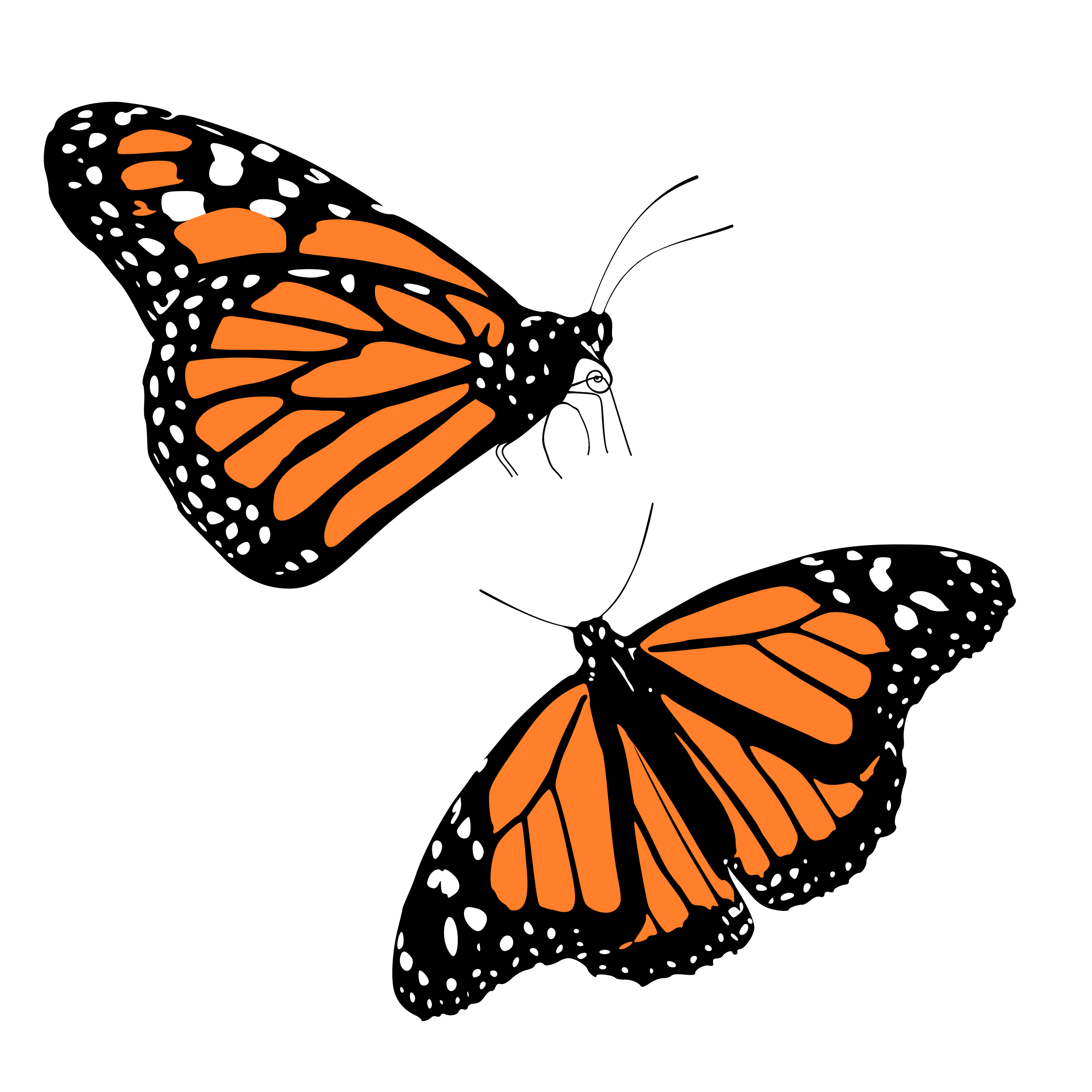 Cave clipart coloring page. Monarch butterfly with background