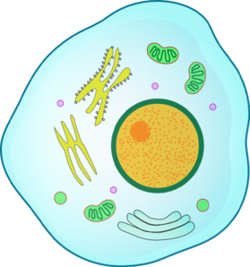 animal cell png