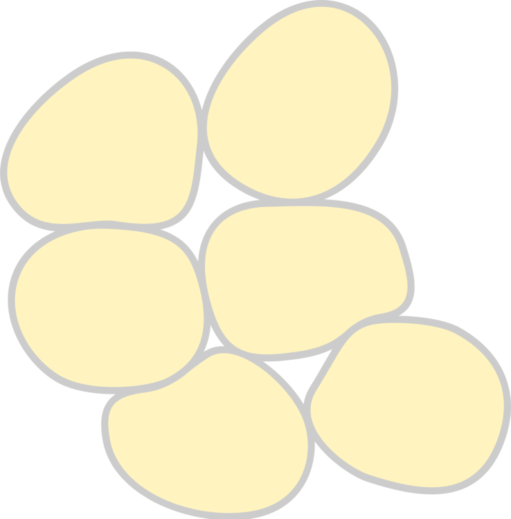 Cell clipart tissue cell. White adipose adipocyte free