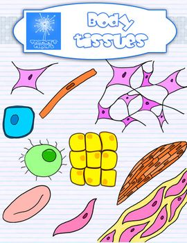 cell clipart tissue cell