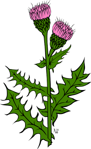 Weeds drawing symbol. The scottish thistle why