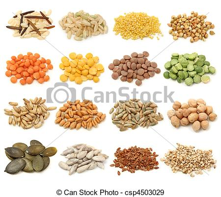 Grain and seeds collection. Cereal clipart wheat seed banner