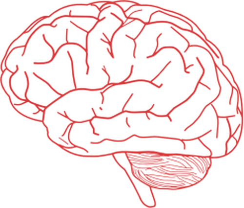 Cerebro vector. Png image related wallpapers