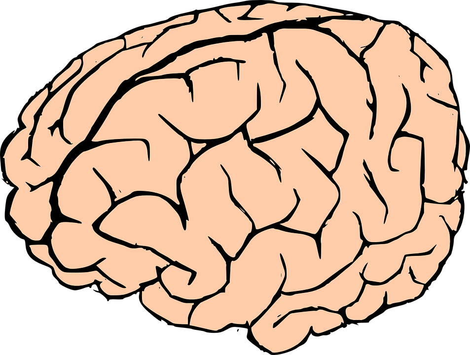 Cerebro vector brain. Human clipart at getdrawings
