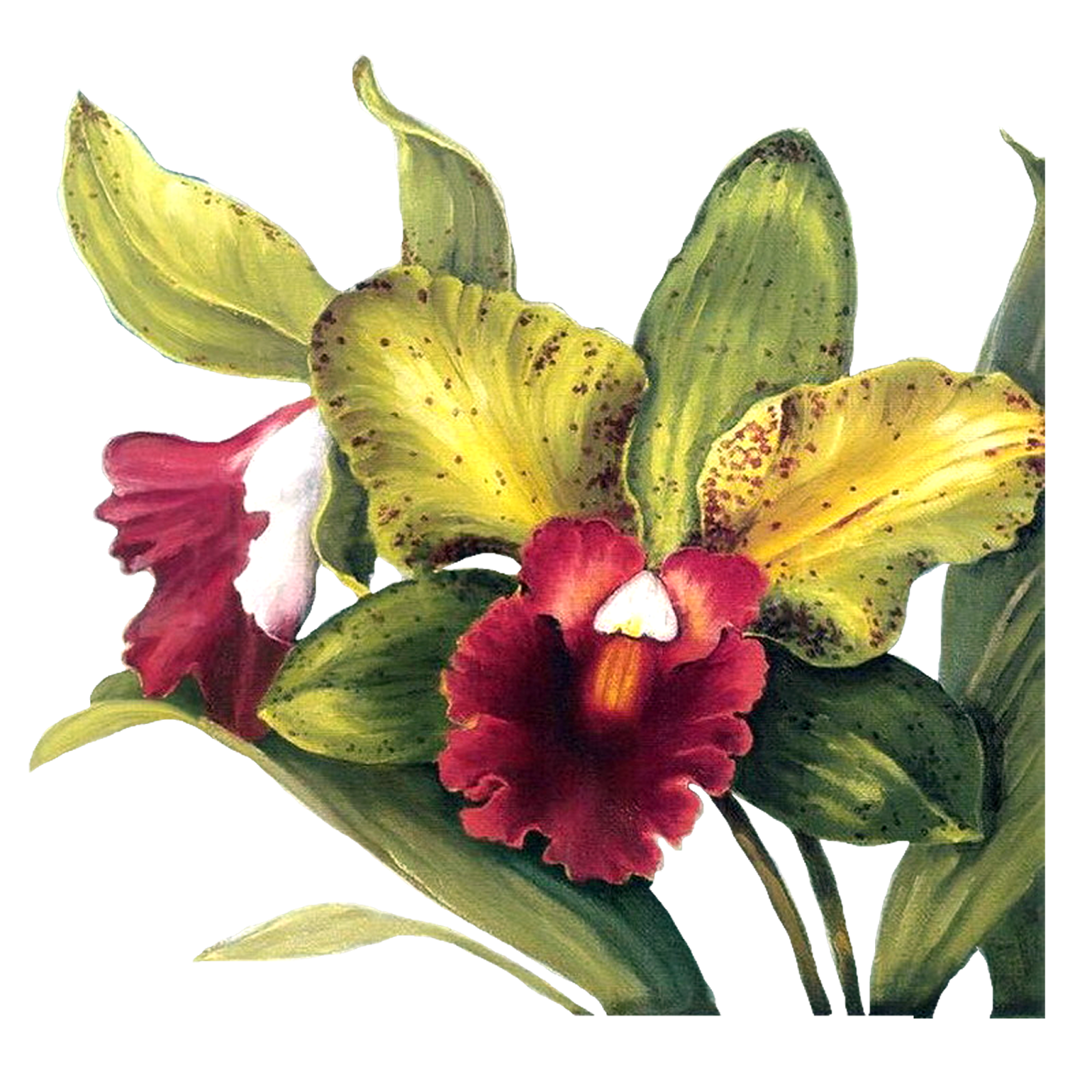 Chalk flowers png. Decoupage flower painting pattern