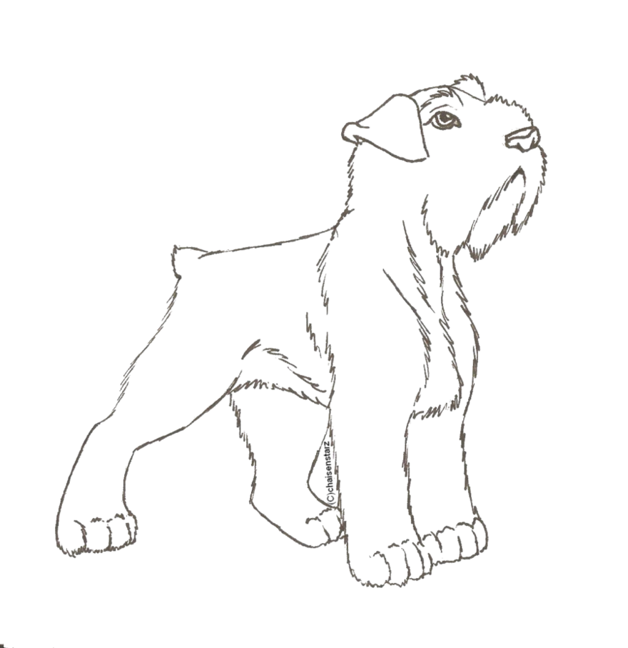 Schnauzer line at getdrawings. Challenger drawing colouring picture download