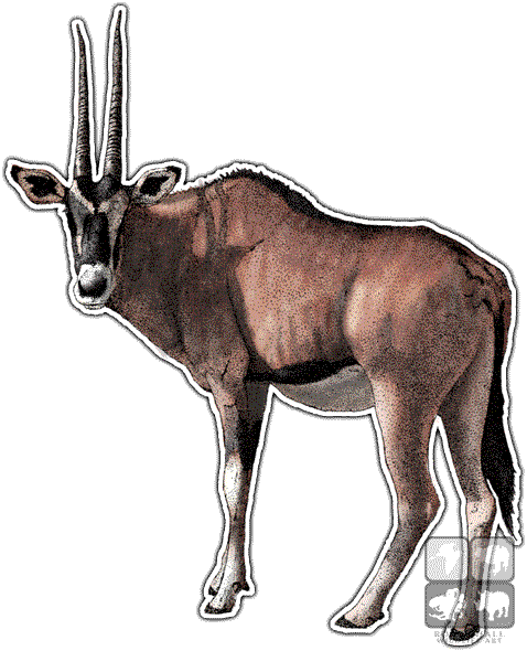 Chamois drawing ibex. East african oryx beisa