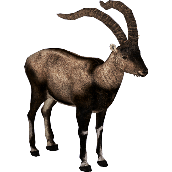 Chamois drawing ibex. Pyrenean transparent png stickpng