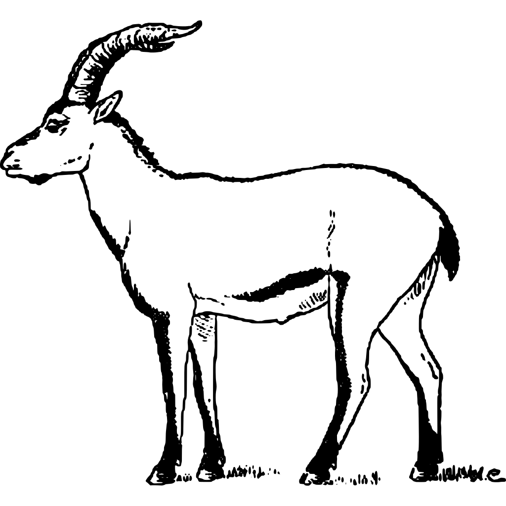 Chamois drawing ibex. Clipart transparent png stickpng