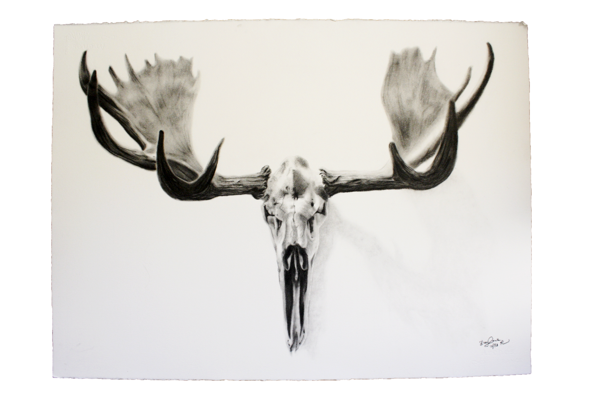 Dear drawing charcoal. Winter moose is coming