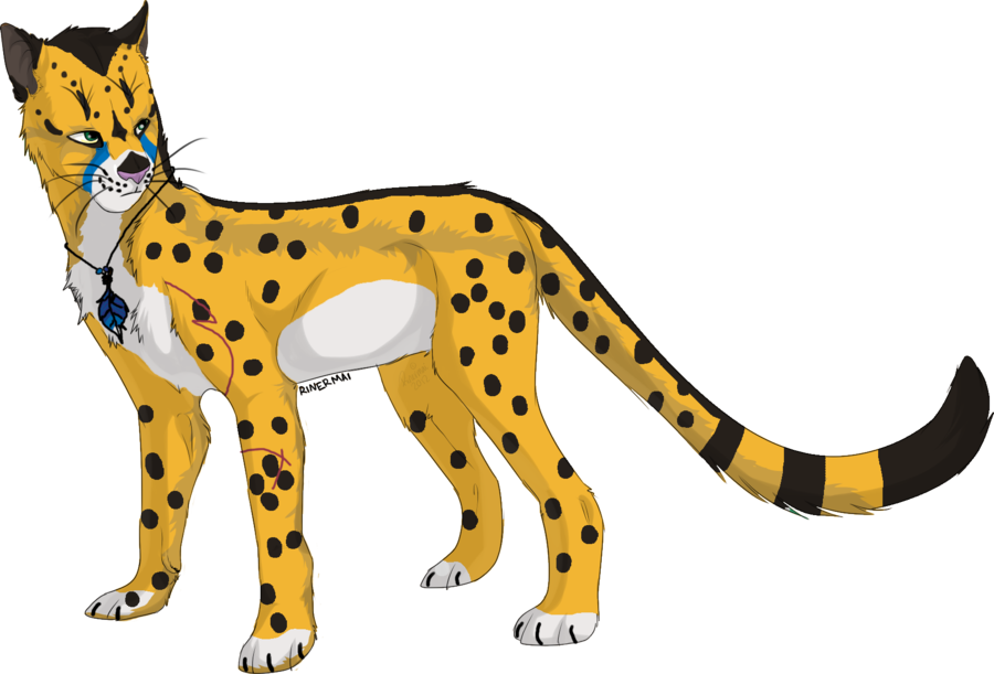 Cheetahs drawing small. Custom cheetah by drackeagan