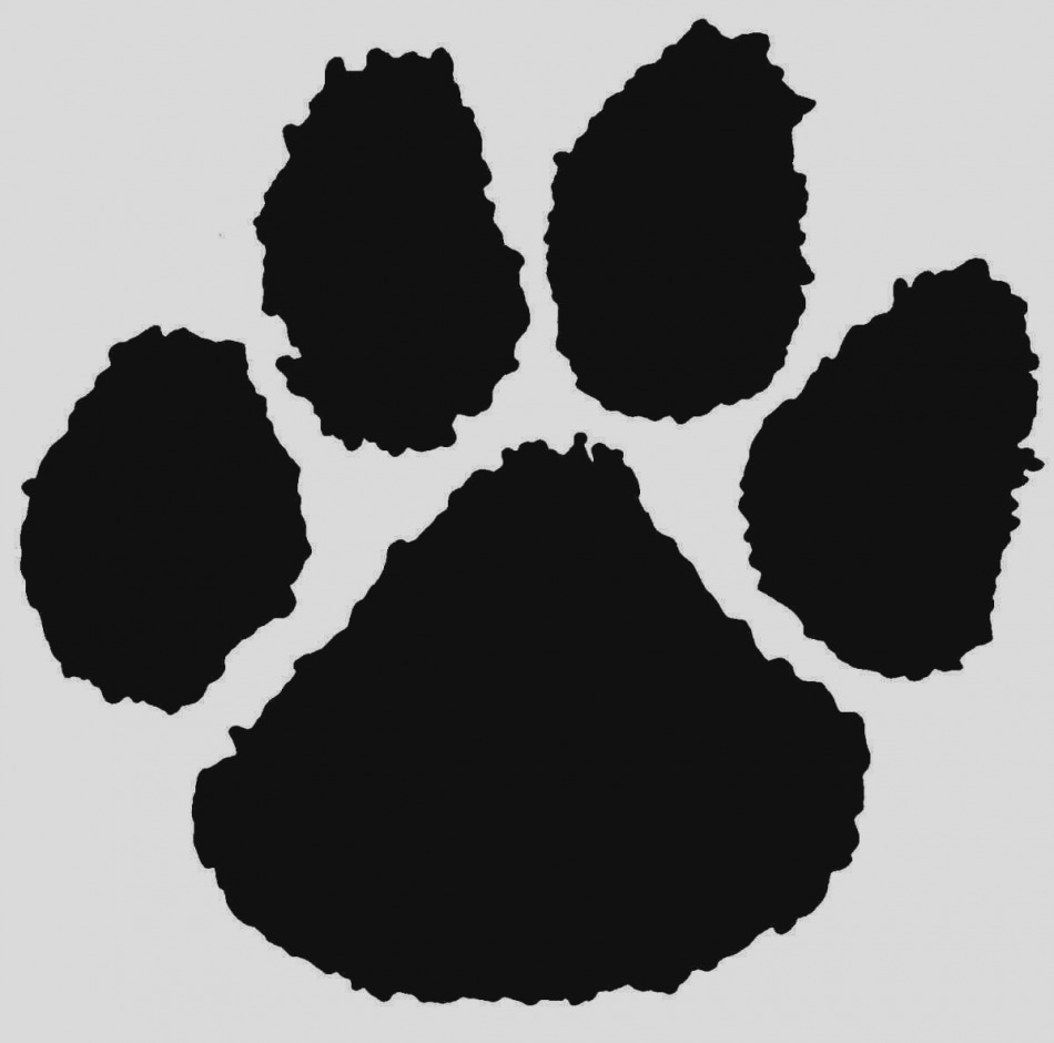 Cheetah clipart claw. Great tiger paw clip