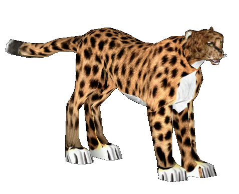 Cheetah head png. Image asiatic mad zt
