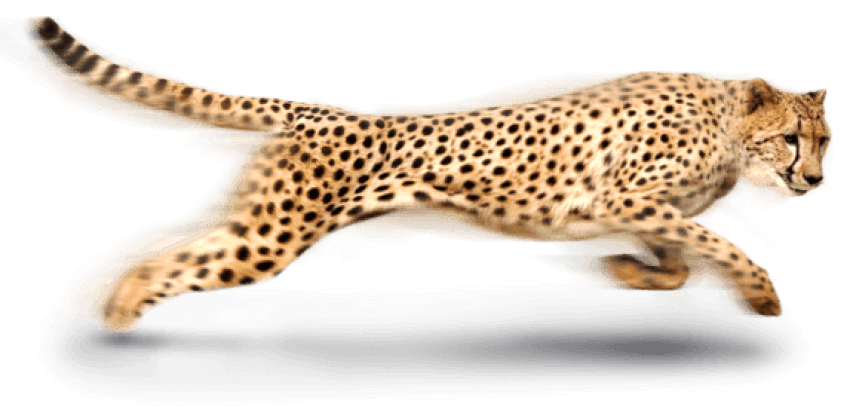 Free images toppng transparent. Cheetah png vector download