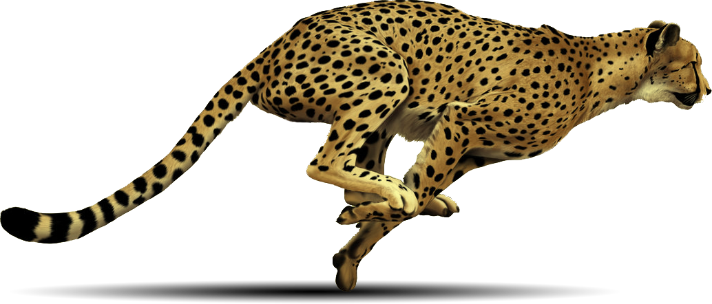 Cheetahs drawing side view. Cheetah png images free