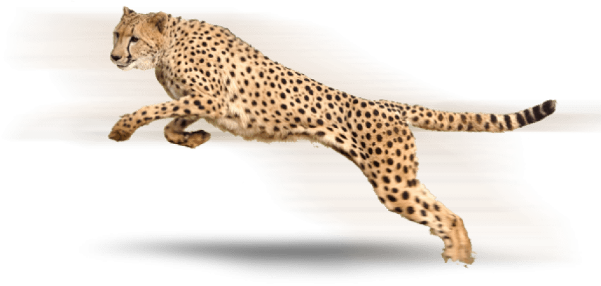 Free images toppng transparent. Cheetah png black and white library