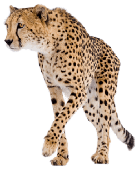 Download images background toppng. Cheetah png vector free library