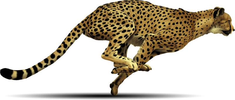 Cheetah spot png. Download free image with