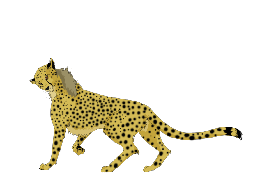 Cheetahs drawing habitat. Running cheetah by sakuracheetah