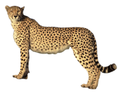 Dlpng download image with. Cheetah tag png vector free