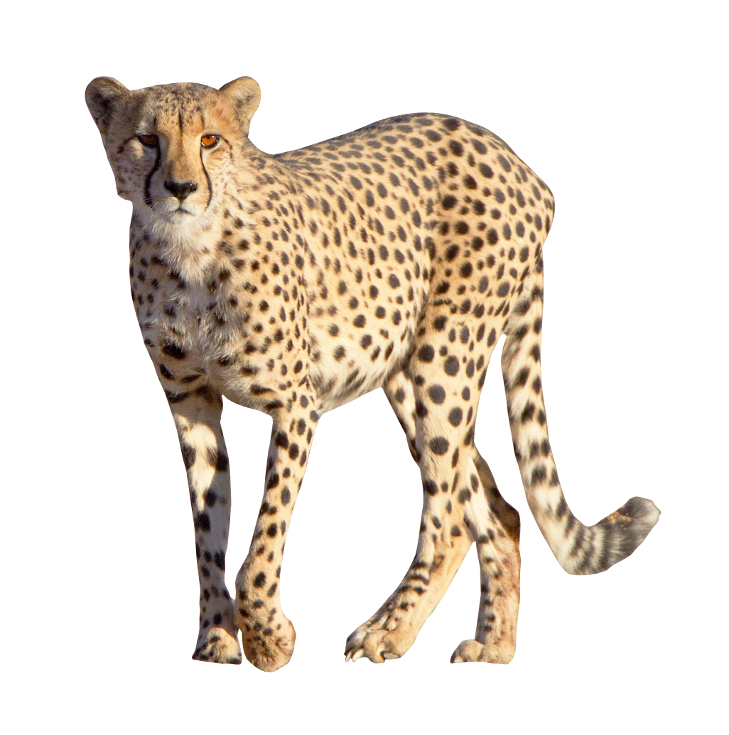 Images pngpix image. Cheetah tag png picture royalty free stock