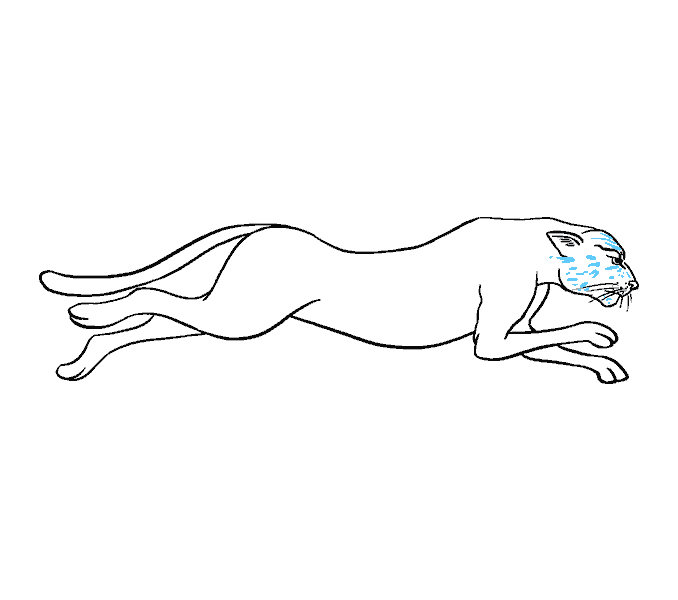 How to draw a. Drawing cheetah vector free