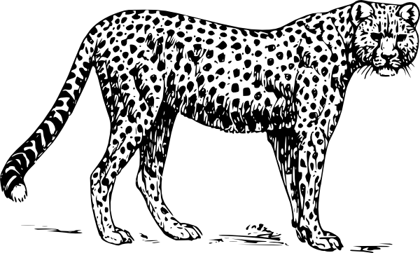 Cheetahs drawing. Cheetah clip art at